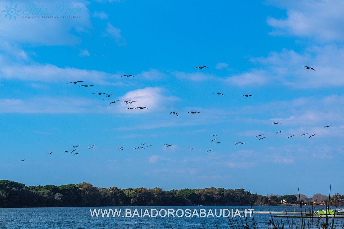 https://www.baiadorosabaudia.it/wp-content/uploads/2015/09/Sabaudia-BAIA-DORO9.jpg